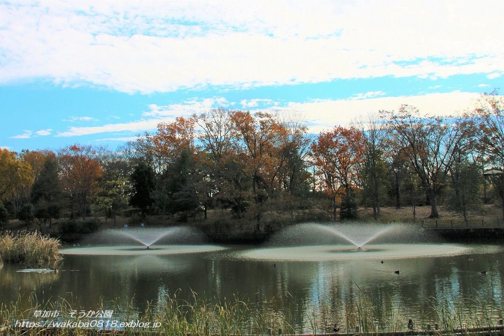 そうか公園の木々が紅葉していました(^^♪_e0052135_14172382.jpg