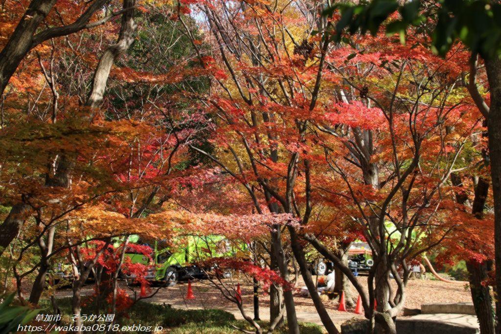そうか公園の木々が紅葉していました(^^♪_e0052135_14172771.jpg