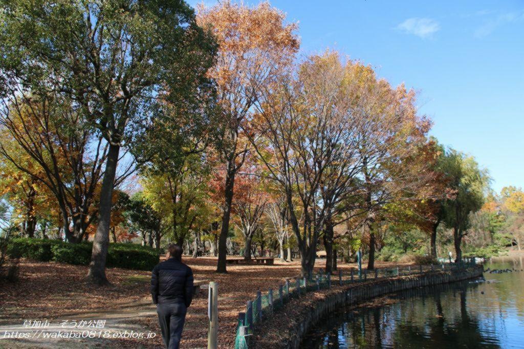 そうか公園の木々が紅葉していました(^^♪_e0052135_14173428.jpg