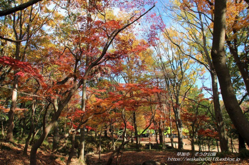 そうか公園の木々が紅葉していました(^^♪_e0052135_14173646.jpg