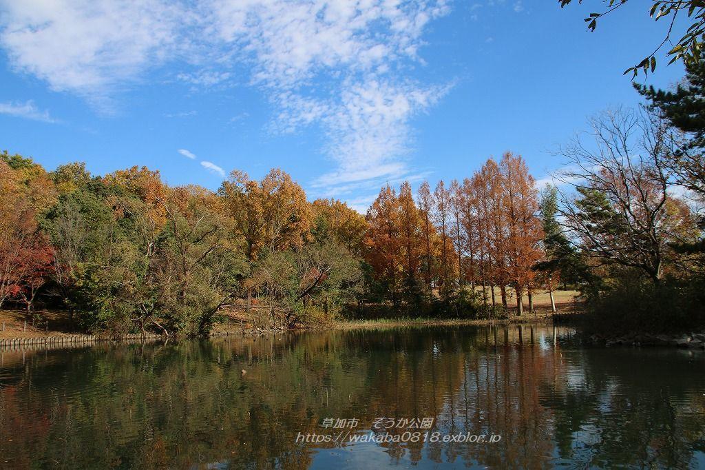 そうか公園の木々が紅葉していました(^^♪_e0052135_14173803.jpg