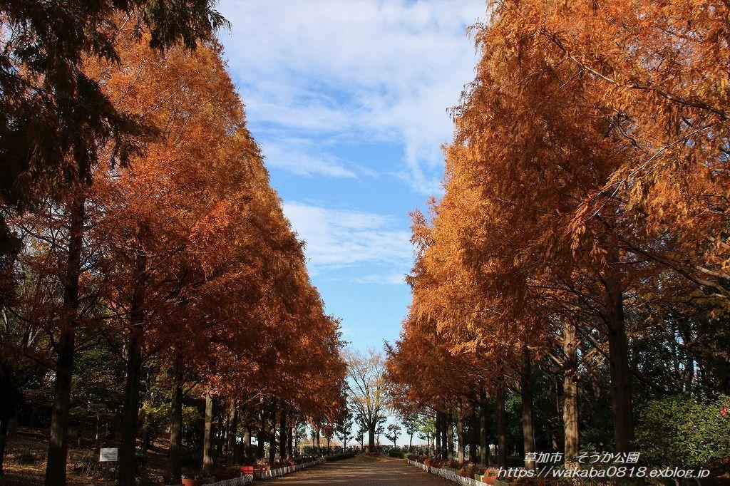 そうか公園の木々が紅葉していました(^^♪_e0052135_14174267.jpg