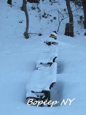 札幌の冬イルミネーションとさえら他食事_e0373235_06384963.jpeg
