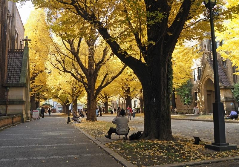 東京大学本郷キャンパスより ☆_d0146247_23114965.jpg
