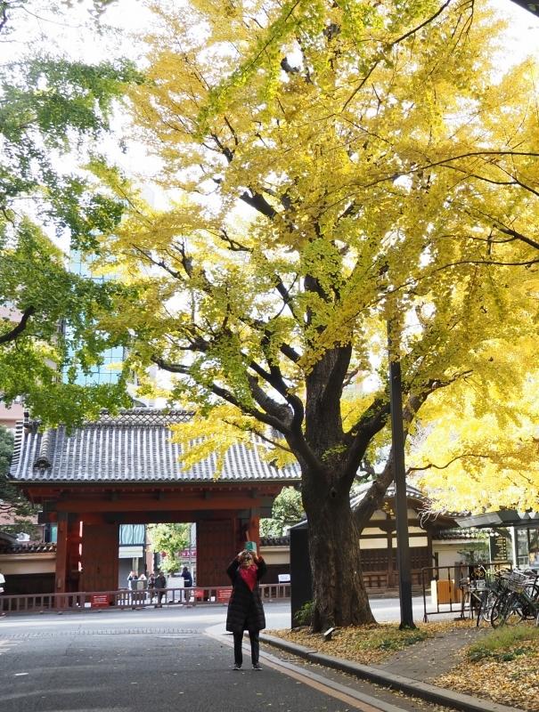 東京大学本郷キャンパスより ☆_d0146247_23123751.jpg