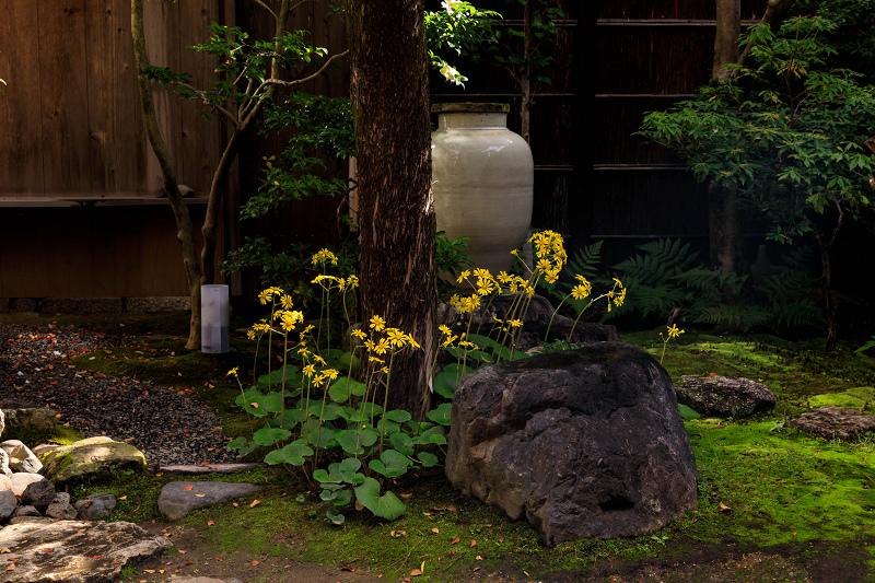 石蕗咲く庭(圓徳院)_f0155048_23182065.jpg