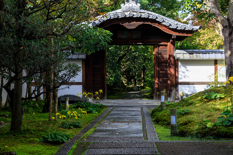 石蕗咲く庭(圓徳院)_f0155048_23184011.jpg