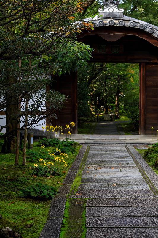 石蕗咲く庭(圓徳院)_f0155048_23184939.jpg