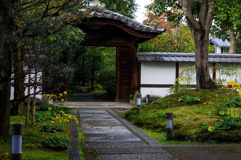 石蕗咲く庭(圓徳院)_f0155048_2320164.jpg