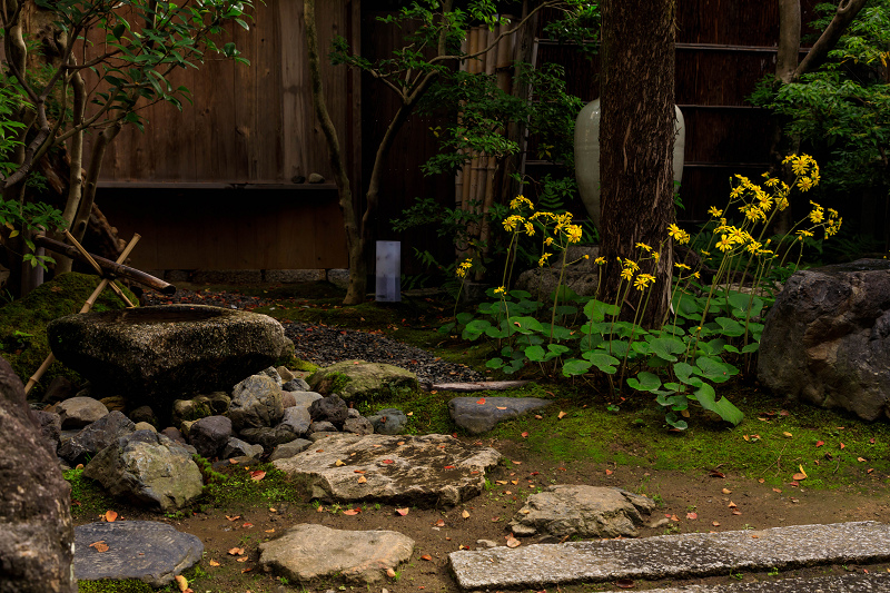 石蕗咲く庭(圓徳院)_f0155048_23212340.jpg