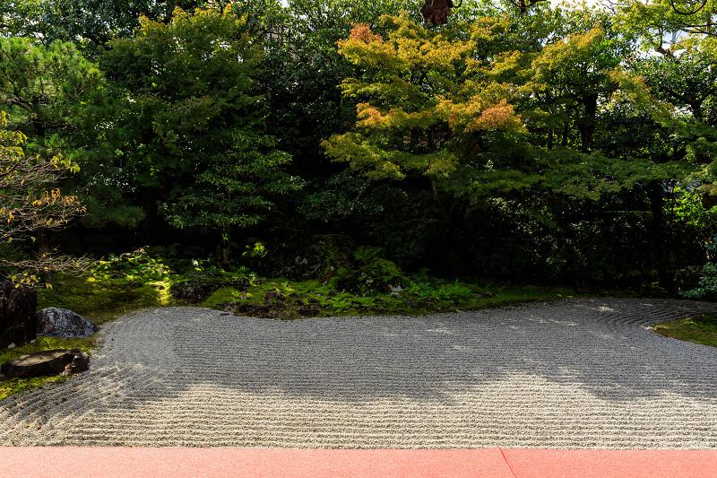 石蕗咲く庭(圓徳院)_f0155048_2321890.jpg