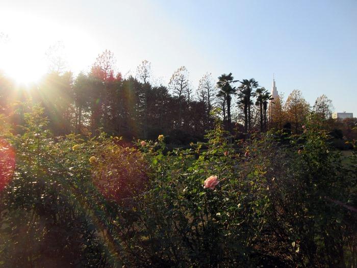 【新宿御苑】整形庭園を眺めて【2019東京紅葉めぐり】_b0009849_18361679.jpg