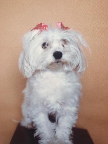 人見敏男さんに描いて頂いたお客様の可愛い愛犬達の帯。_f0181251_17244228.jpg