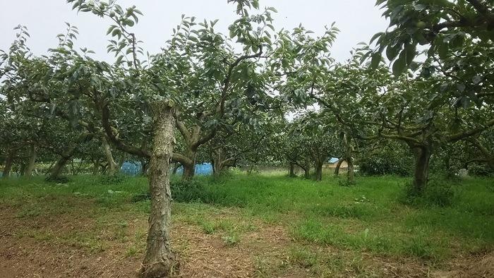 この時期の私的OFFは果物狩りб_e0009056_12384278.jpg