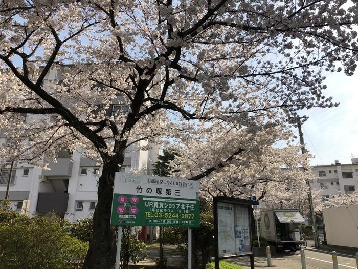 桜咲き春本番\\( ˆoˆ )/_e0009056_13554478.jpg