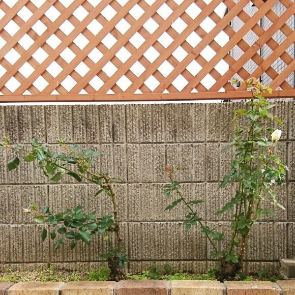 ++いつもと変わらない日々なのに*&庭のお花たち*++_e0354456_10364385.jpg