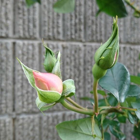 ++いつもと変わらない日々なのに*&庭のお花たち*++_e0354456_10365744.jpg