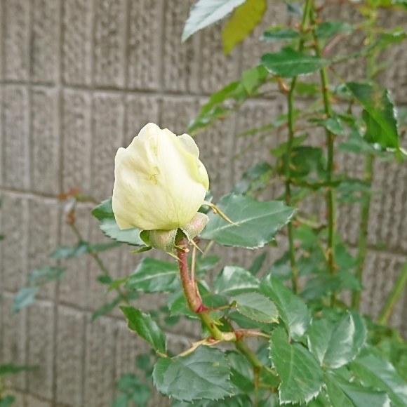 ++いつもと変わらない日々なのに*&庭のお花たち*++_e0354456_10370594.jpg