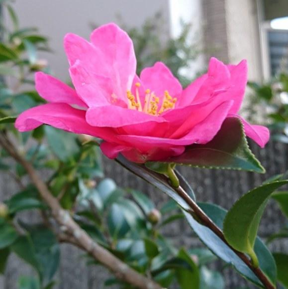 ++いつもと変わらない日々なのに*&庭のお花たち*++_e0354456_10371336.jpg