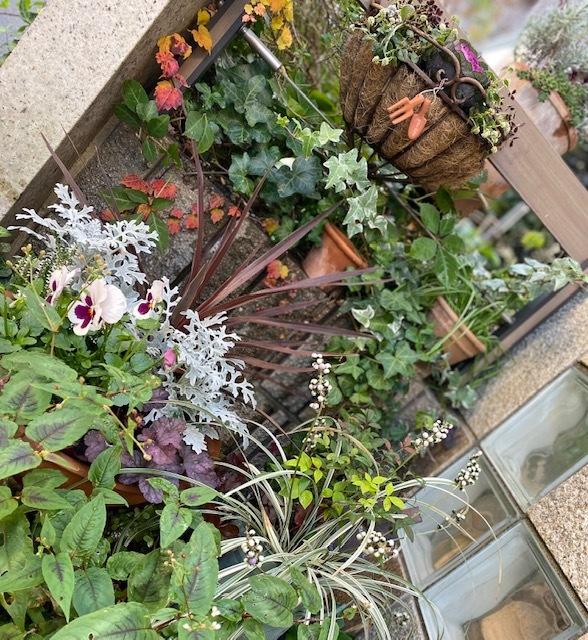 gardening    ご近所さんとの会話に♪♪_a0165160_17390740.jpg