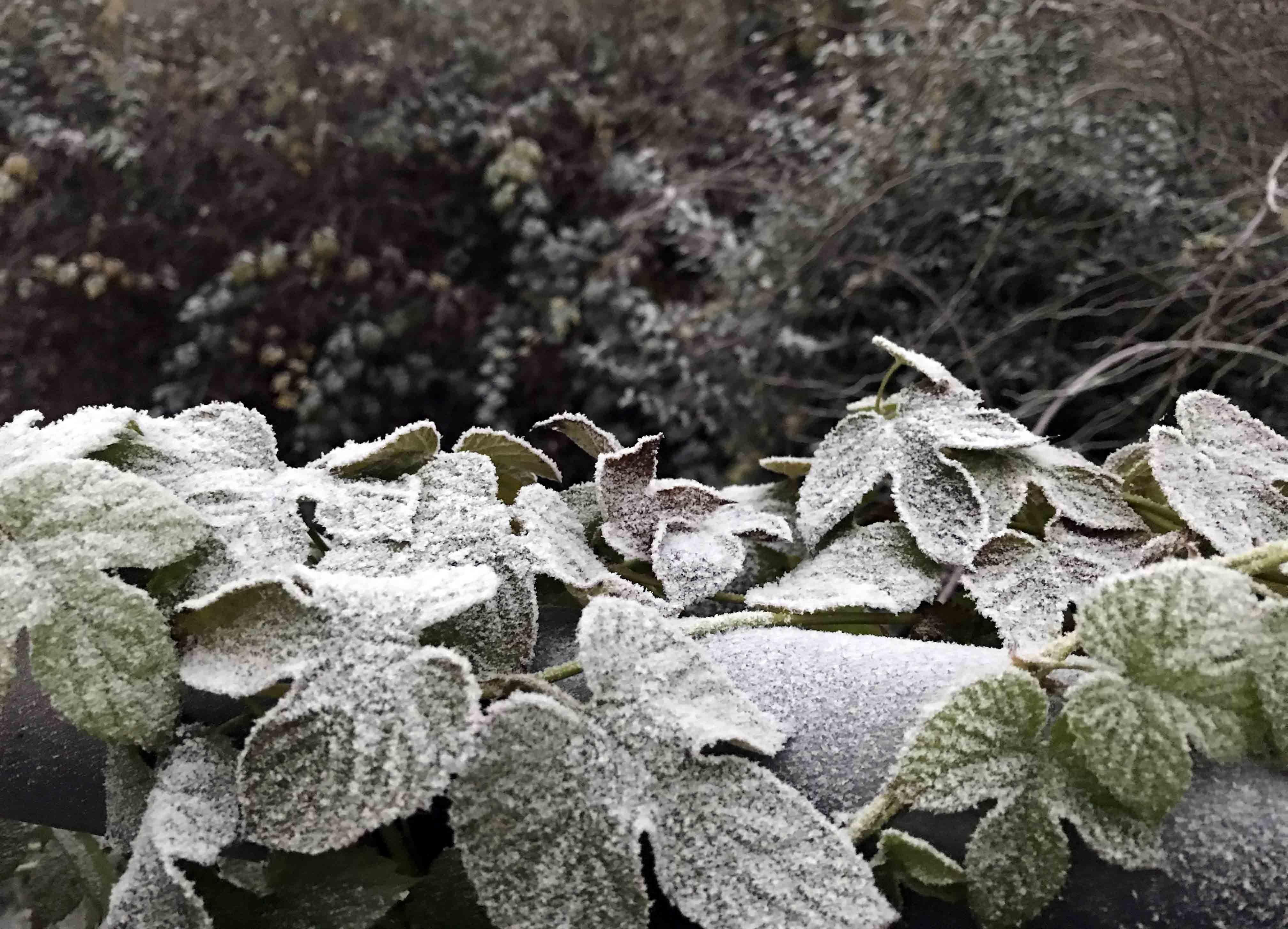氷点下の日_c0192161_02091151.jpg