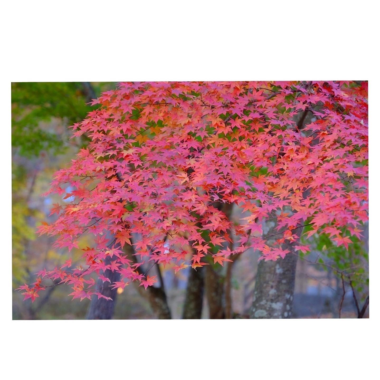 山中湖の紅葉_a0335867_18164095.jpeg