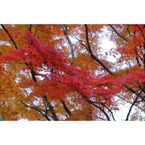 山中湖の紅葉_a0335867_18205102.jpeg