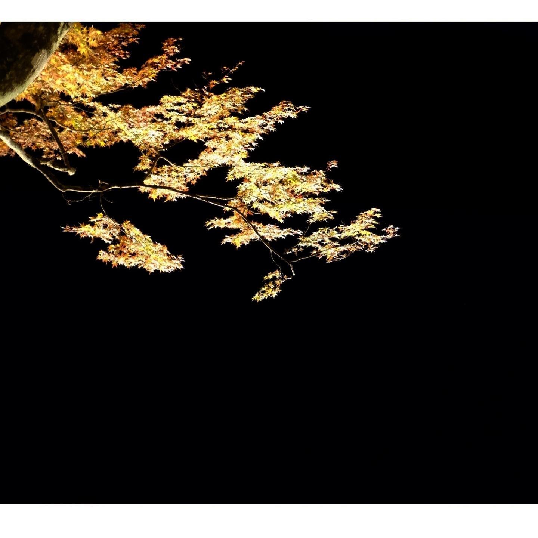 夕焼けの渚 紅葉祭り_a0335867_18431154.jpeg