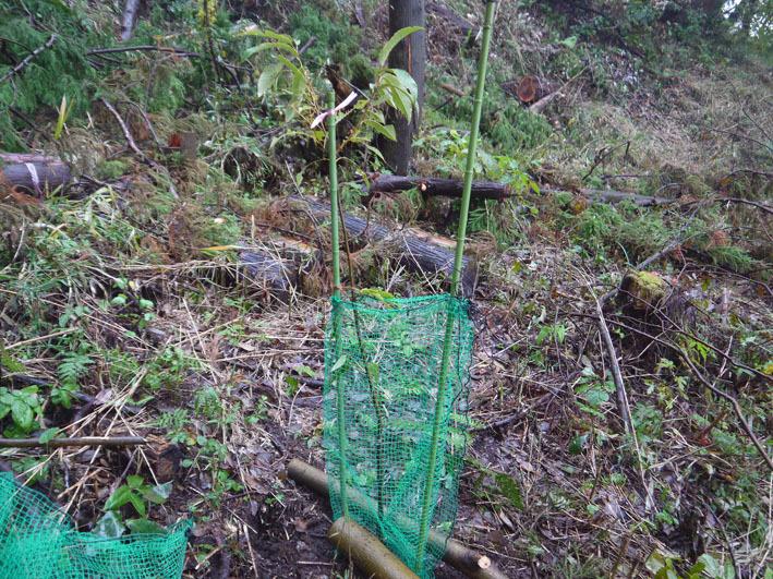 12・21六国見山への山桜植樹開始は10時から_c0014967_18543500.jpg