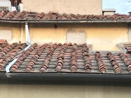 屋根の上、上って荒らした奴、誰だ!?_a0136671_00254849.jpeg