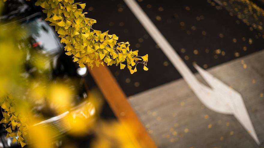 黄色い桜通り_d0353489_22281089.jpg