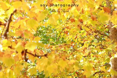ある日、黄色のなかを_d0220593_15481068.jpg