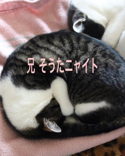 にゃんこ劇場「アンモニャイト兄弟」_c0366722_12594176.jpeg