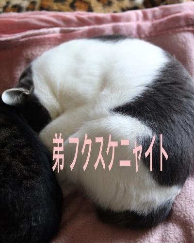 にゃんこ劇場「アンモニャイト兄弟」_c0366722_13000717.jpeg