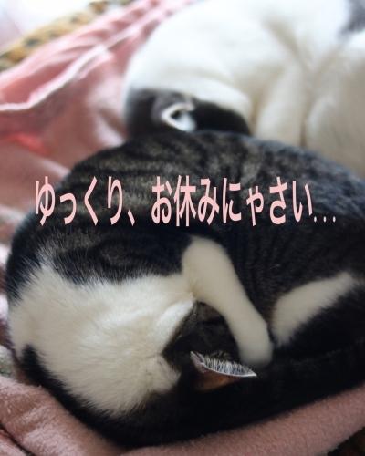 にゃんこ劇場「アンモニャイト兄弟」_c0366722_13002801.jpeg