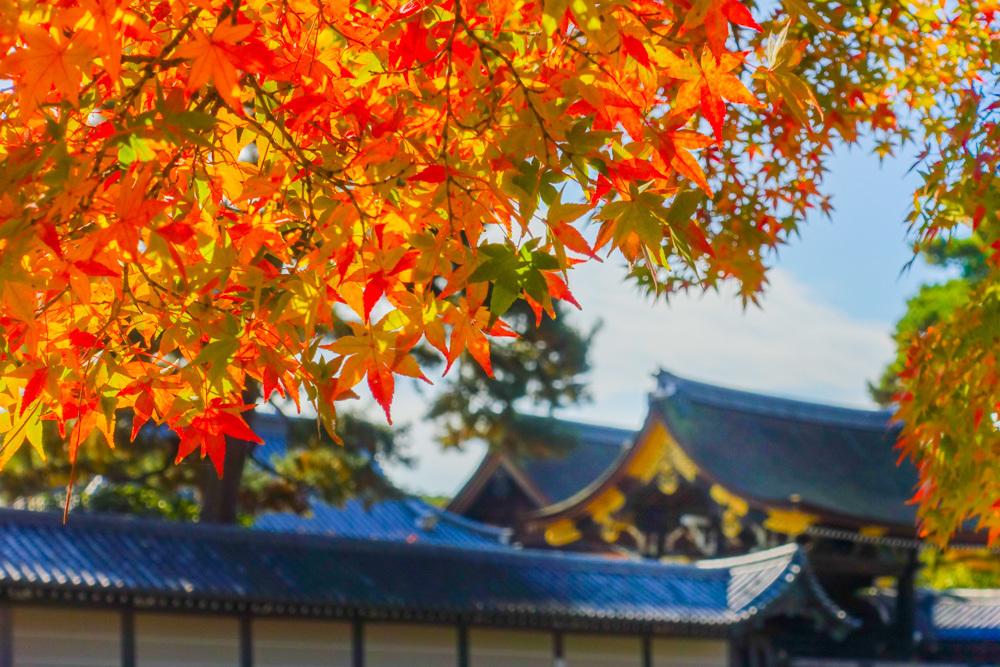 京都2019 その4_c0220824_13555306.jpg