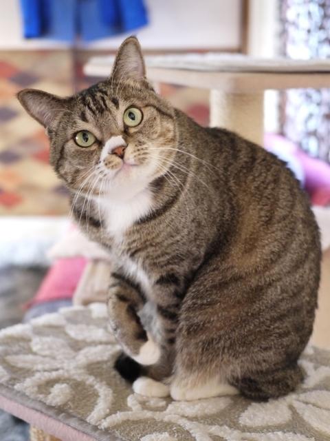 猫のお留守番 らんまるくん編。_a0143140_18361239.jpg