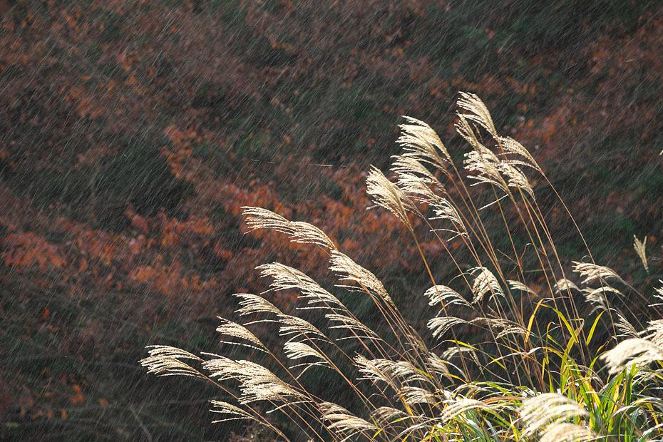 時雨れる_c0067040_11211189.jpg