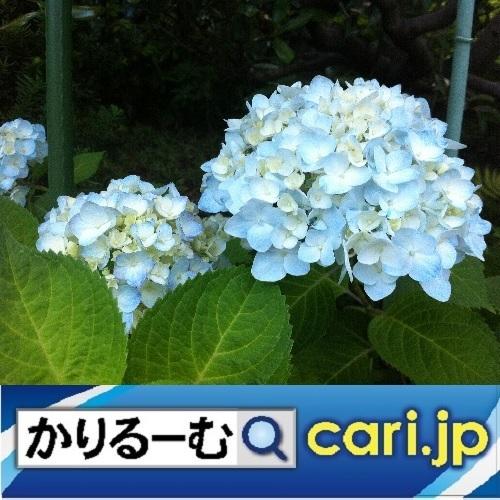 2019年11月分 広報・記事等 cari.jp_a0392441_17430362.jpg