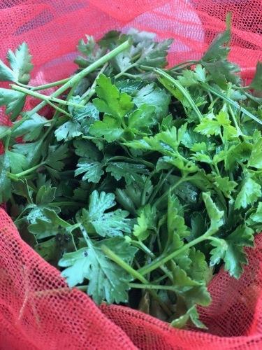 冬のイタリアンパセリは香りが上品で奥深い味わいです_c0222448_11503952.jpg