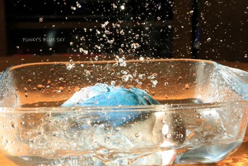 水浴びB.Bの記録 (12月3日)_c0145250_12122829.jpg