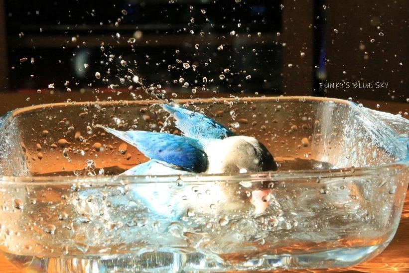 水浴びB.Bの記録 (12月3日)_c0145250_12123188.jpg