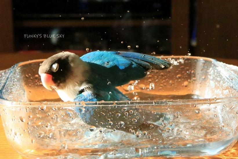 水浴びB.Bの記録 (12月3日)_c0145250_12123587.jpg