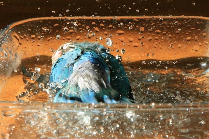 水浴びB.Bの記録 (12月3日)_c0145250_12123978.jpg