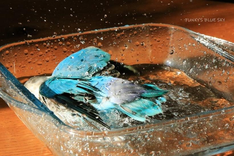 水浴びB.Bの記録 (12月3日)_c0145250_12124383.jpg