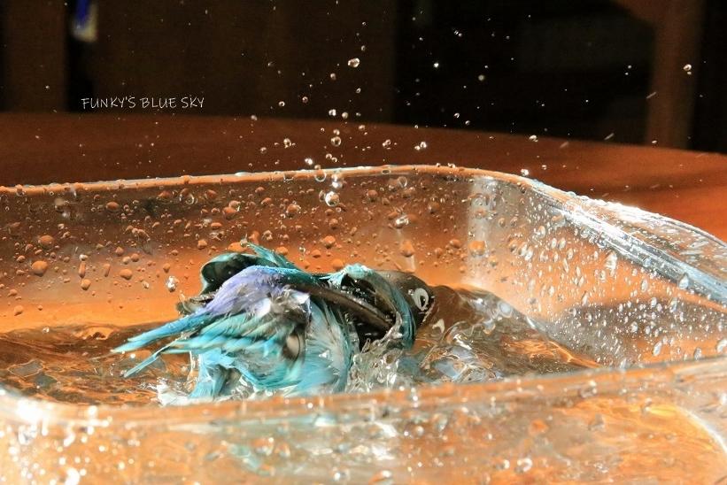 水浴びB.Bの記録 (12月3日)_c0145250_12130328.jpg