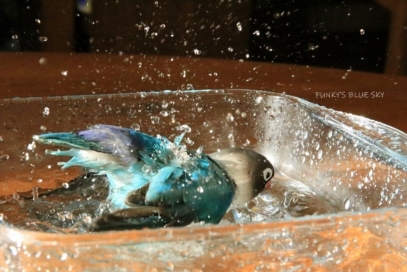 水浴びB.Bの記録 (12月3日)_c0145250_12131592.jpg
