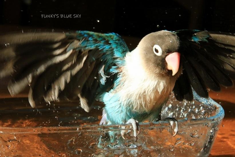 水浴びB.Bの記録 (12月3日)_c0145250_12133290.jpg