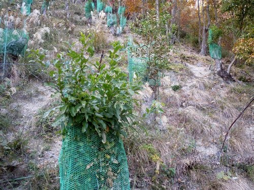 持続可能なクヌギ林の再生を願いつつ台場クヌギを伐採する_b0102572_10153580.jpg