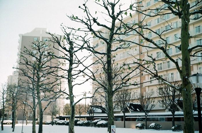 冬のプラタナスと芝生の足跡_c0182775_17143267.jpg
